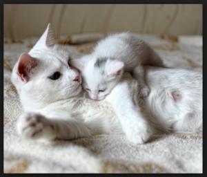 Mitos Kucing Melahirkan Di Dalam Rumah - Info Terkait Rumah